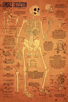Skeletal Study - Aged