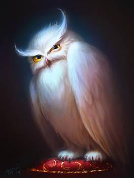 Displeased Owl