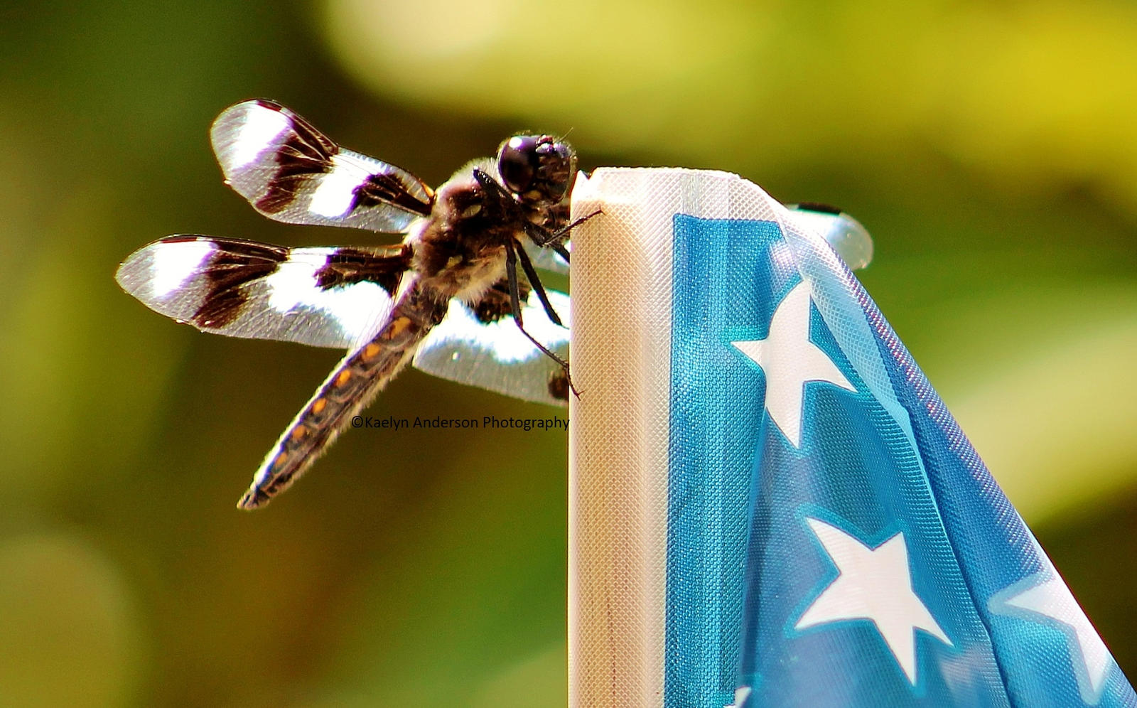 Dragonfly Kissing Freedom by Fastpitchlover96