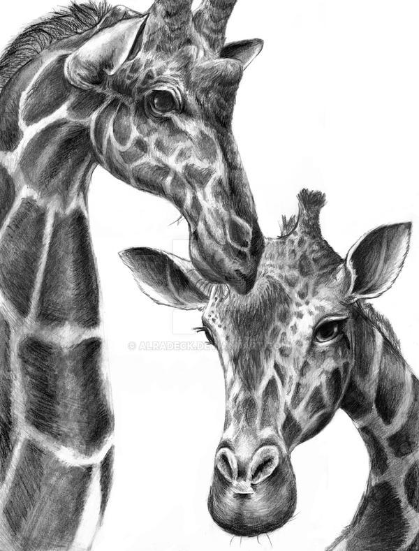 Giraffes in Love Drawing Giraffe Drawing by Alradeck