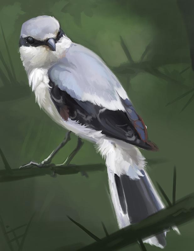 Shrike Study by ALRadeck