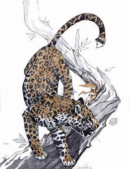 Jaguar study