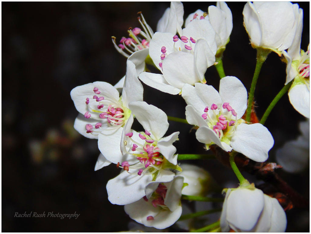 Flowers 34 by chained2stone
