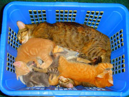 Basket of Cats by chained2stone