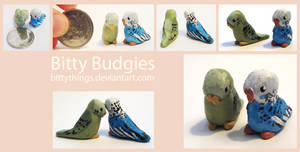 Bitty Budgies - SOLD