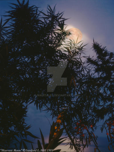 Harvest Moon by mauitales