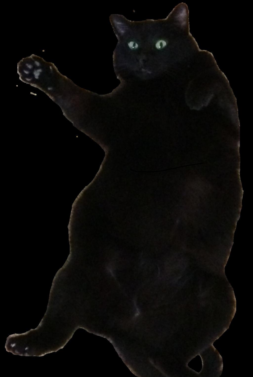 Fat Cats Dancing 119