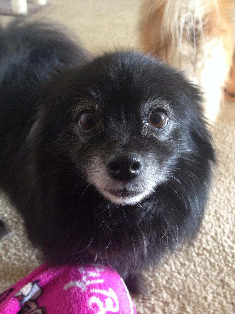 My sweetie, My love , My Dog by Raveology
