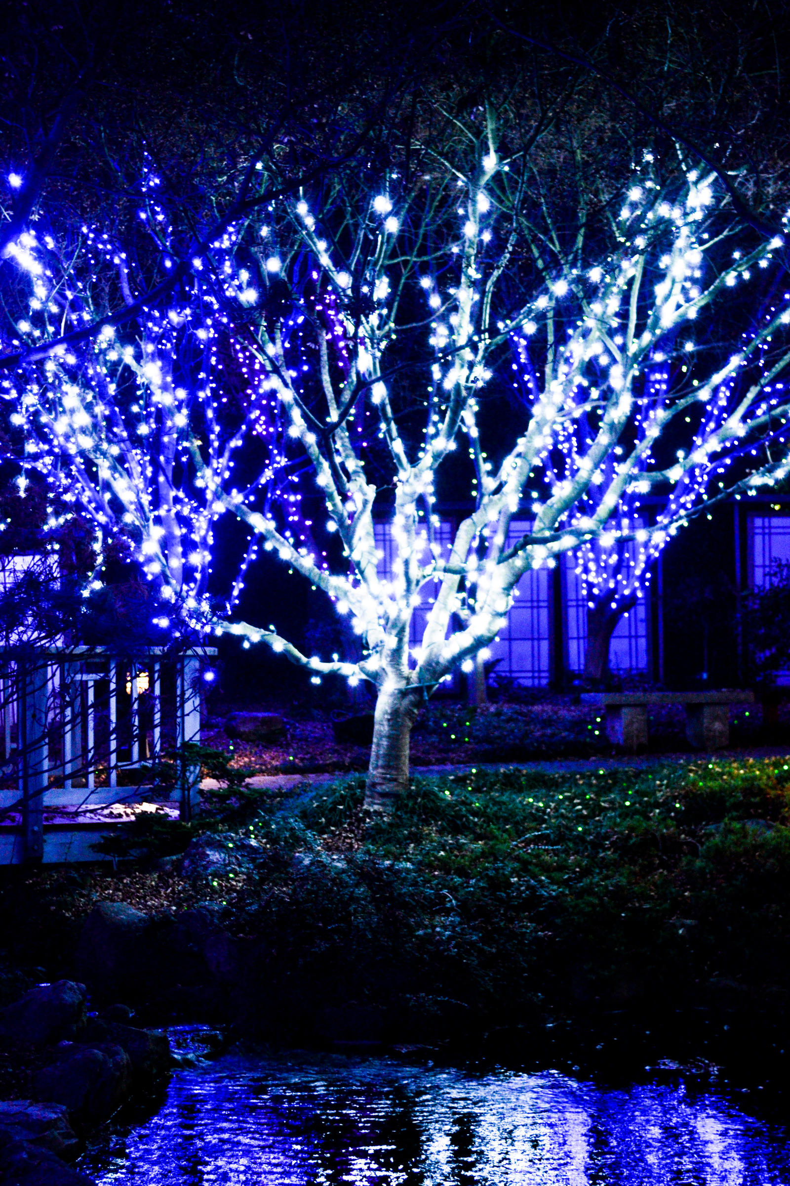 Lewis ginter botanical gardenchristmas lights 10 by yonaka photography on deviantart for Lewis ginter botanical gardens christmas