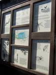 Strumpshaw Fen RSPB reserve