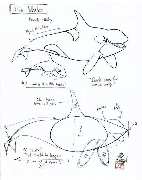 Draw a killer whale by diana huang