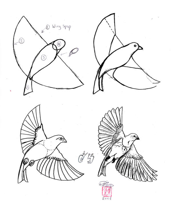 Draw a bird by diana huang on deviantart for Things to practice drawing