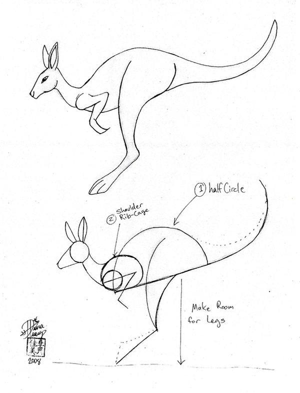 Line Drawing Kangaroo : Draw a kangaroo by diana huang on deviantart