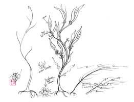 Draw Kelp - Seaweed by Diana-Huang