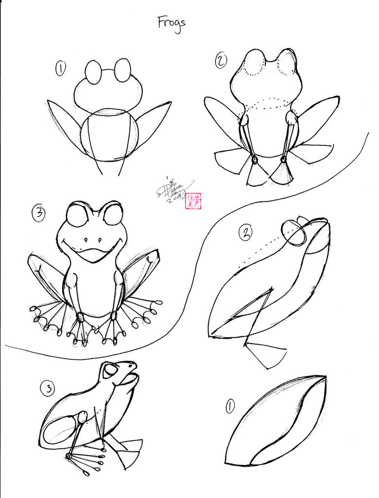 Line Drawing Frog : Draw a frog by diana huang on deviantart