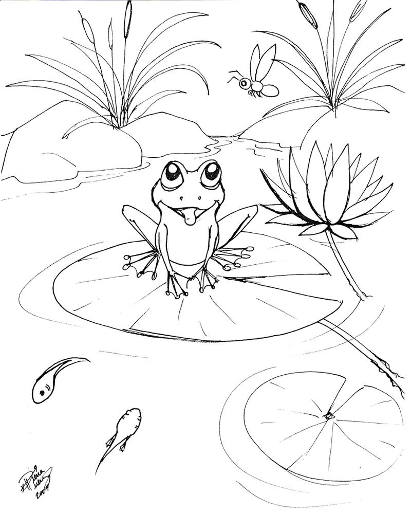 Line Drawing Frog : Drawing of a frog
