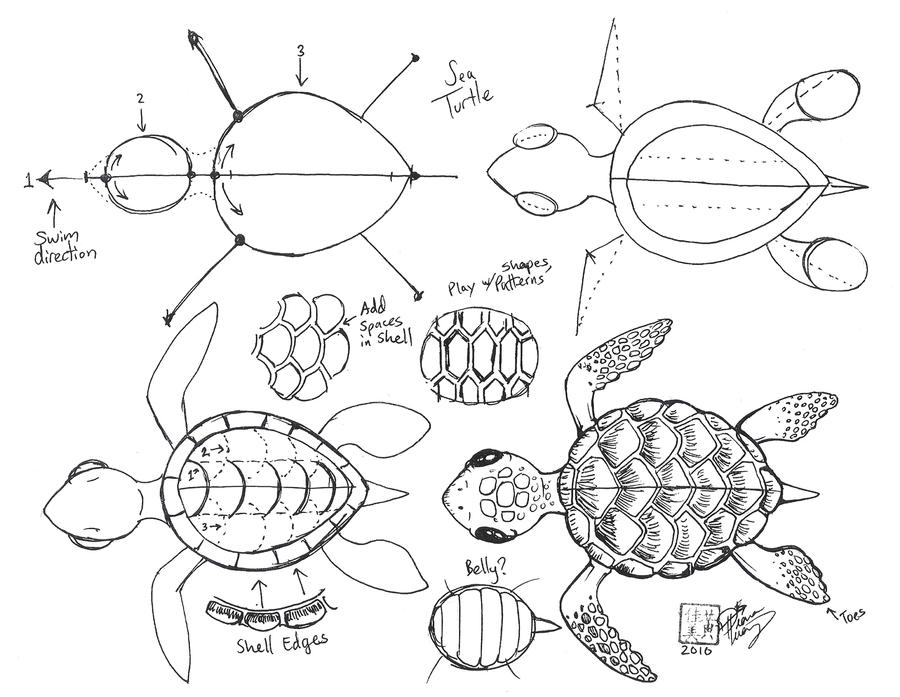 http://fc06.deviantart.net/fs70/i/2010/262/0/1/draw_a_sea_turtle_by_ditroi-d2z2y71.jpg Baby Sea Turtles Drawings Step By Step