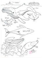 Draw a Humpback Whale by Diana-Huang
