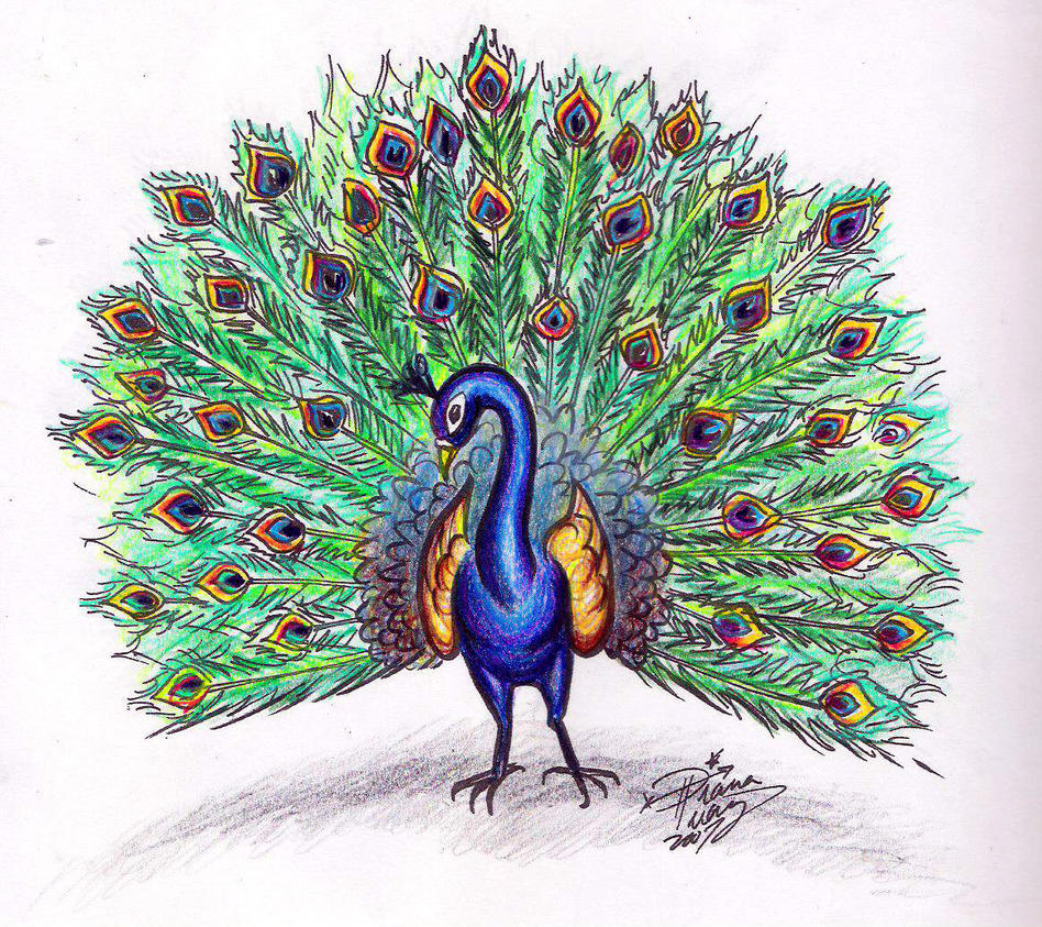 Simple colorful peacock drawing - photo#3