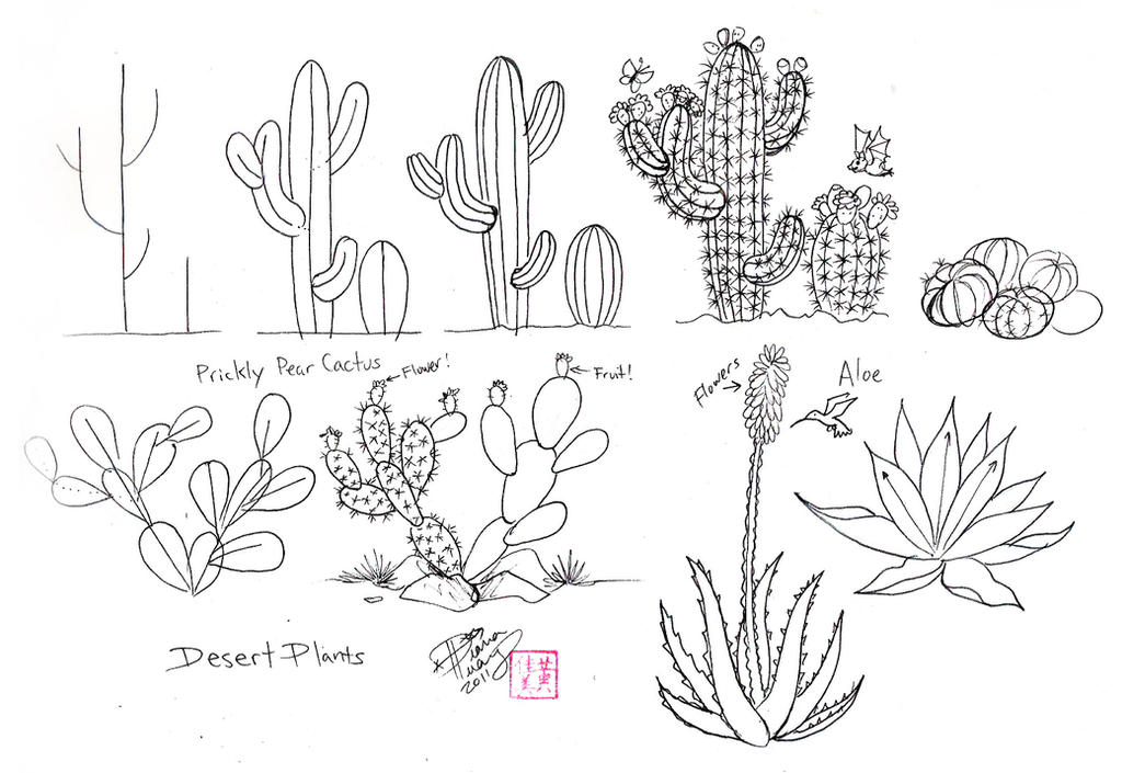 Line Drawing Cactus : Draw cactus by diana huang