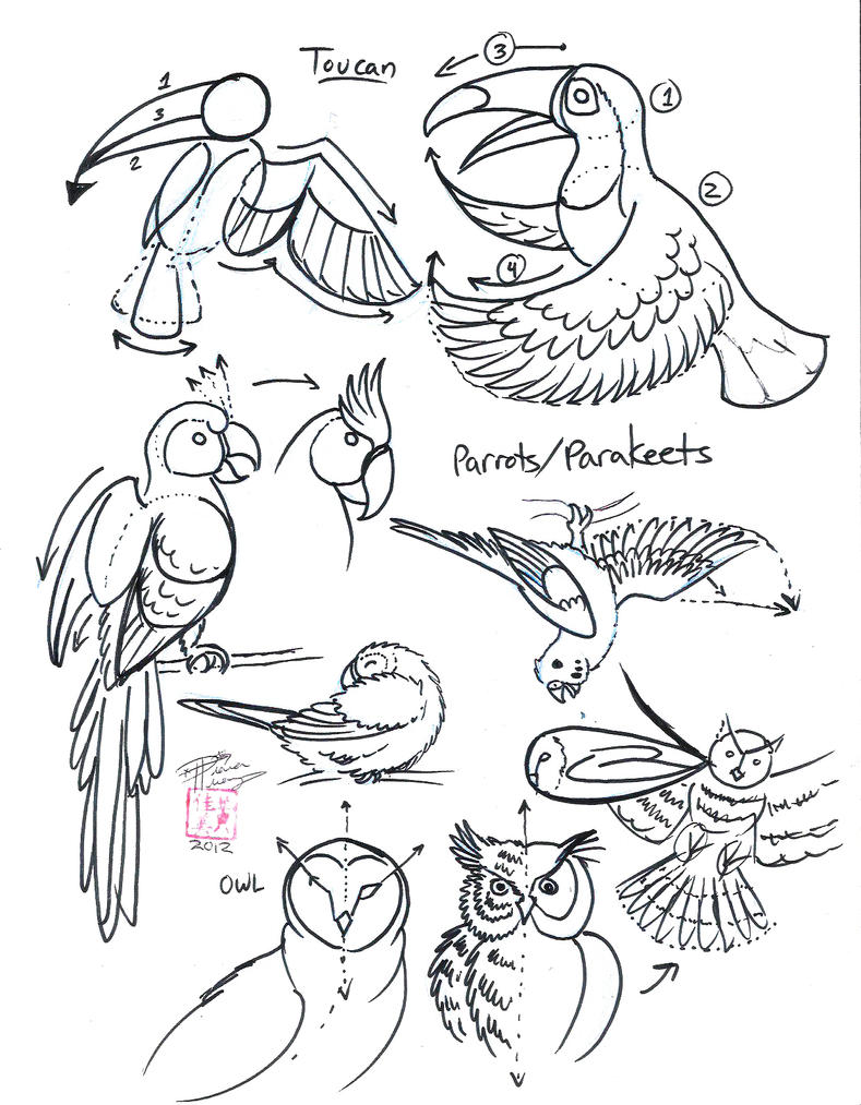 Toucan Drawing Step by Step Draw Toucan Parrot And Owl by