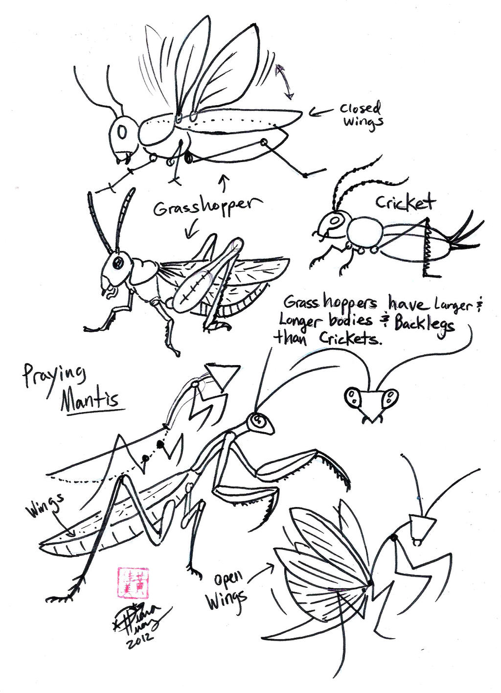 Draw Grasshopper Cricket And Praying Mantis By Diana Huang On