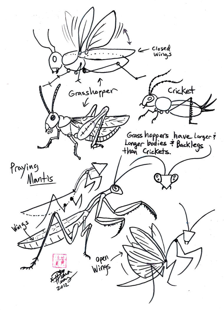 Uncategorized Praying Mantis Coloring Page draw grasshopper cricket and praying mantis by diana huang on huang