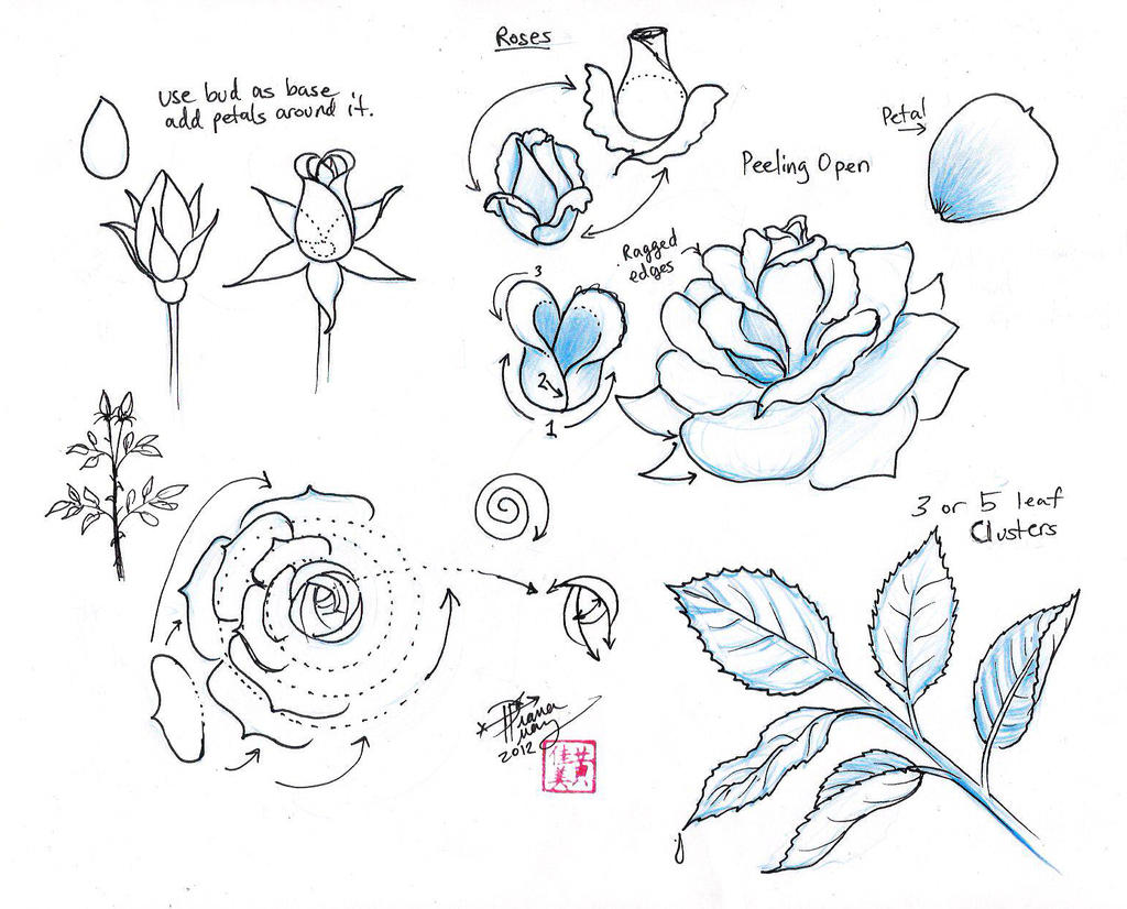 How to draw a flower in stages 45