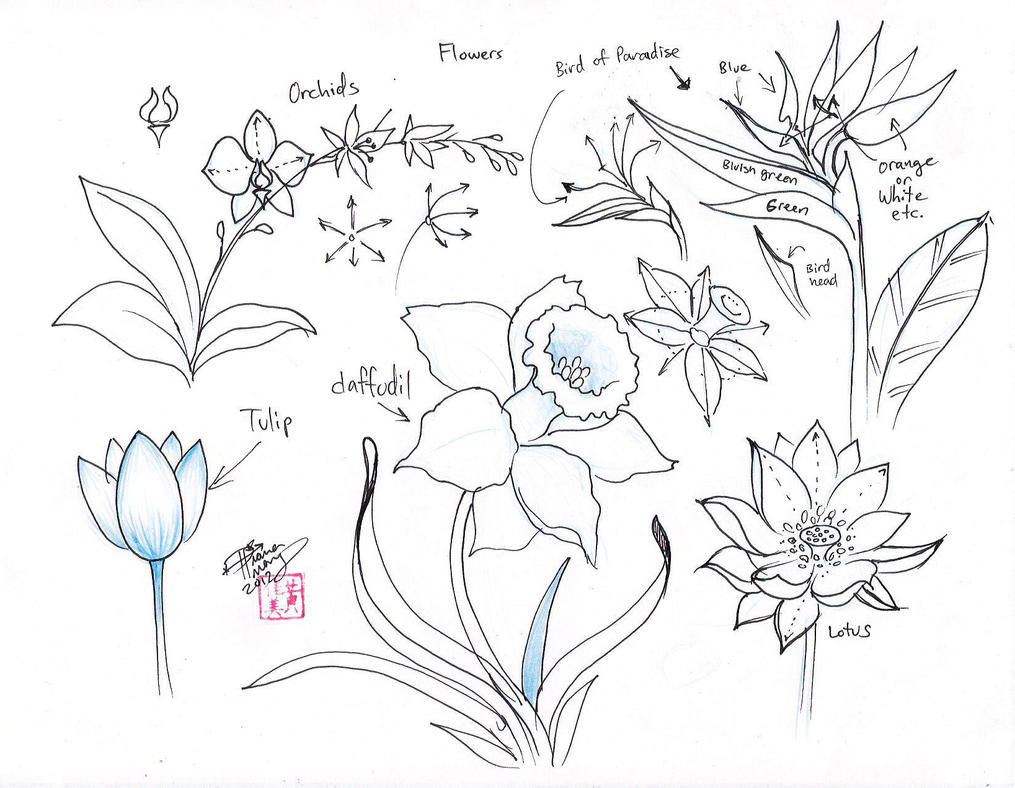 how to draw myrtle flower