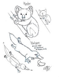 Draw Koala and Duck Billed Platypus by Diana-Huang