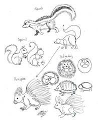 Draw Skunk Squirrel Hedgehog Porcupine by Diana-Huang