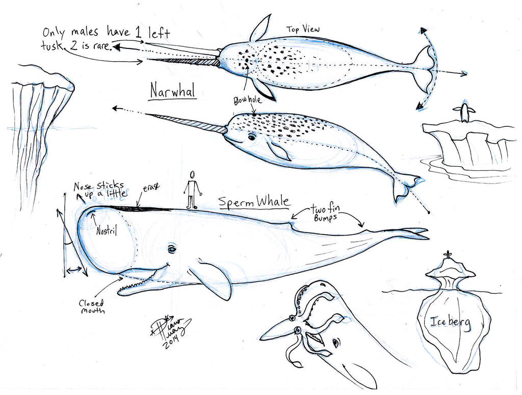 Diagram Of Narwhal - Complete Wiring Diagrams •