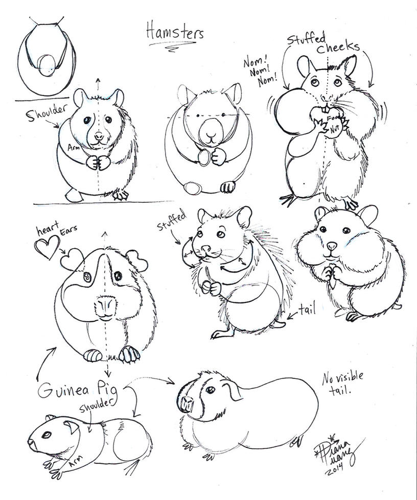 Uncategorized How To Draw Hamsters draw hamster and guinea pig by diana huang on deviantart huang