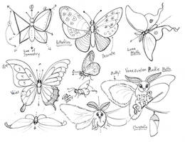 Draw Butterflies and Moths revision
