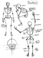 Draw a Human Skeleton by Diana-Huang