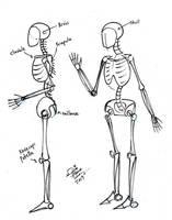 Draw Basic Artist Skeleton 2 by Diana-Huang