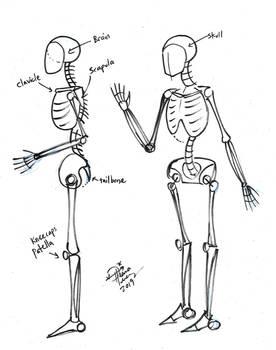 Draw Basic Artist Skeleton 2
