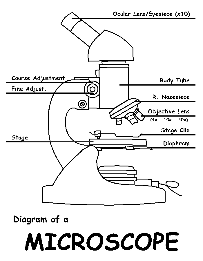 Labeled Compound Microscope Diagram