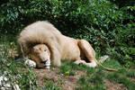 Sleep of White King