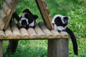 Two Ruffed Lemurs by NicamShilova