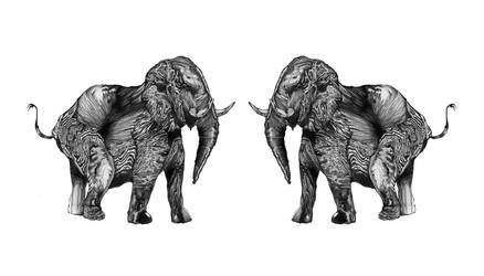 Elephant by KawaguchiElly