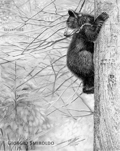 little bear by selvatico3