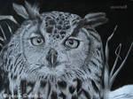 Owl - Asio otus