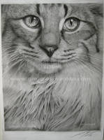 Pencil cat by selvatico3