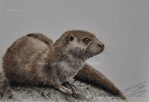 River otter - waterolor