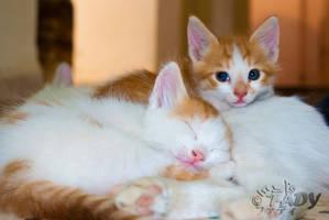 Skinny Cat - Cutie Look by Raneem90