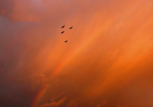 Four birds and a rainbow by postaldude66