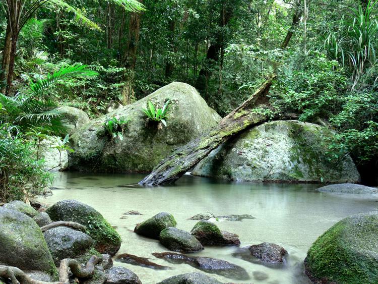 Rainforest pool by postaldude66