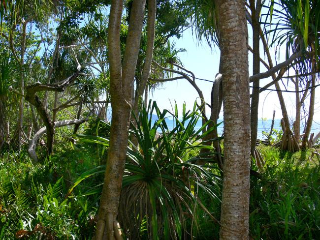 tropical island by postaldude66