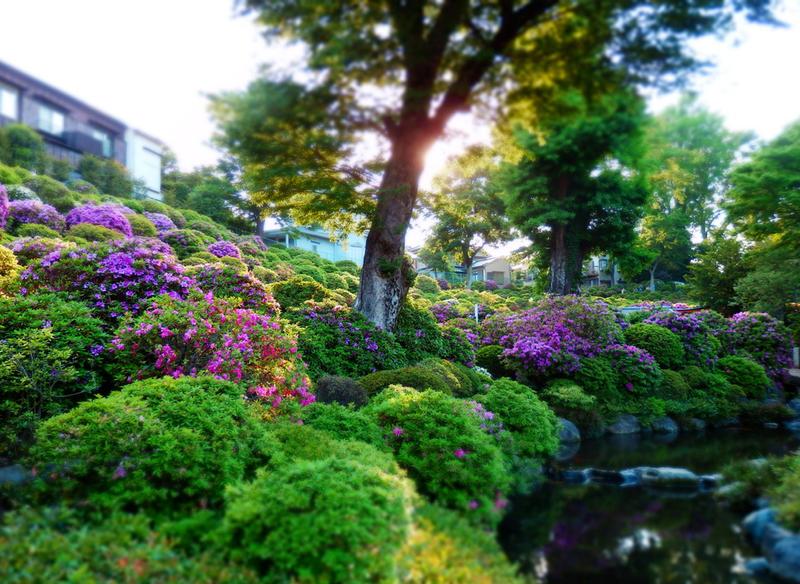 Japanese garden by postaldude66